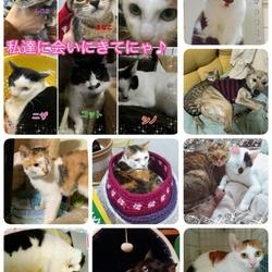 川越保護猫譲渡会★子猫、成猫★猫カフェタイプ サムネイル2