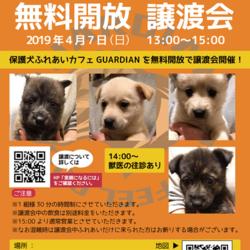 保護犬カフェ GUARDIAN 無料開放 譲渡会