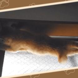 窓枠に立つうちの茶トラ猫です