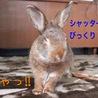 保護うさぎ:くるみちゃん(メス)温泉うさぎ サムネイル6