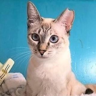 ジャム☆シャム猫っぽい可愛い女の子