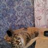 可愛いキジ猫の女の子♩ サムネイル3
