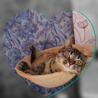 可愛いキジ猫の女の子♩