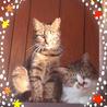 可愛いキジ猫の女の子♩ サムネイル2