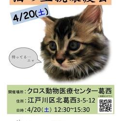 猫の里親譲渡会@西葛西・船堀(平井小松川Shippoの会) サムネイル2