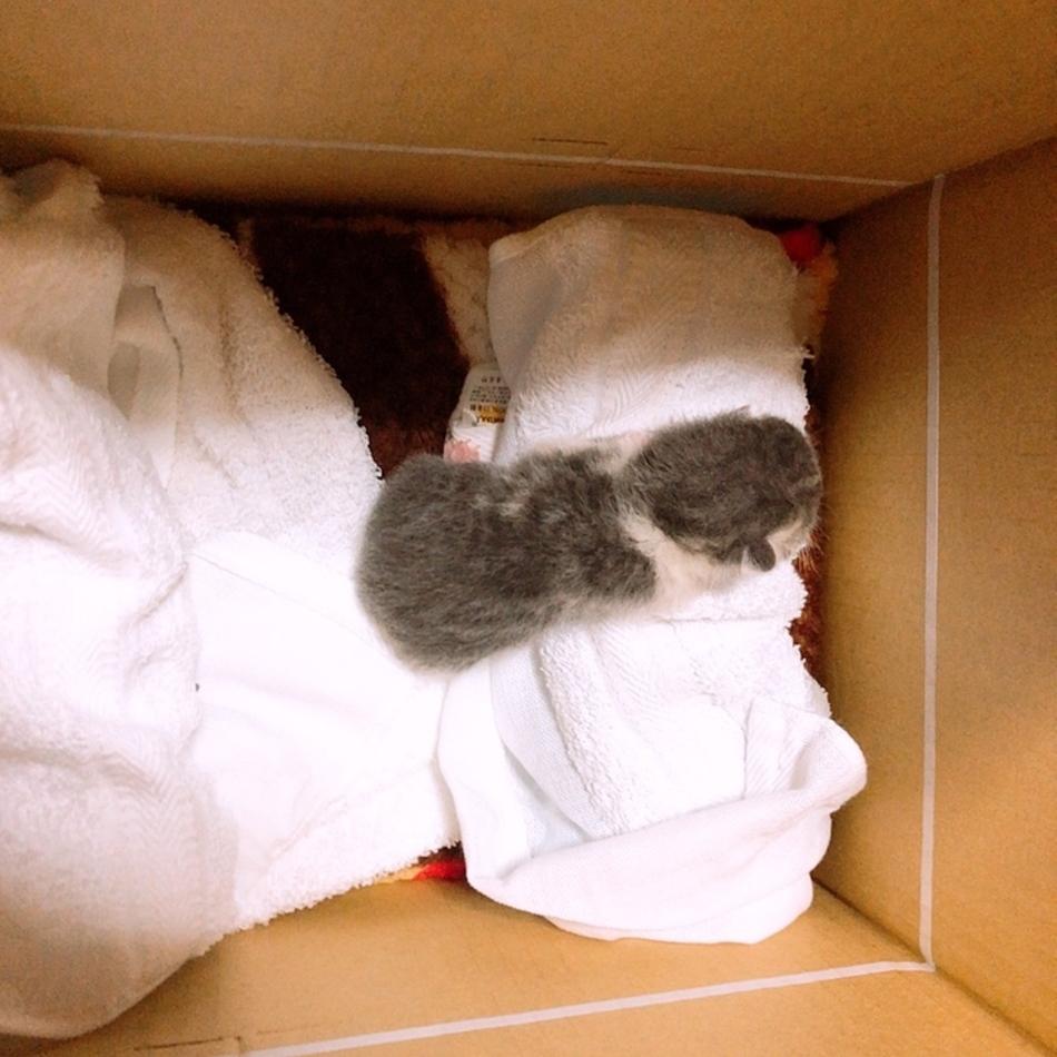 生後5-6日 オス 子猫のカバー写真