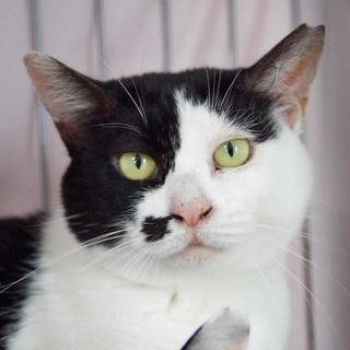 ずっと見ていられる飽きない個性顔☆姉妹猫