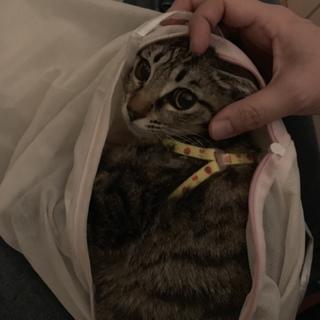 おとなしすぎて放っておけない子猫です。