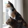 毎日飽きない!とにかく可愛い三毛猫いとちゃん✨ サムネイル5