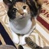 毎日飽きない!とにかく可愛い三毛猫いとちゃん✨ サムネイル6