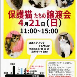 保護猫たちの譲渡会
