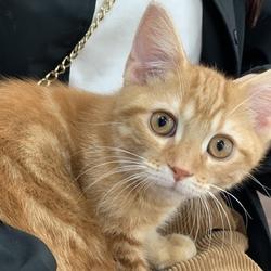 先住猫♂♀と新入り猫♂についてサムネイル