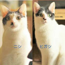 猫ちゃんの里親譲渡会IN高井戸・杉並 サムネイル3