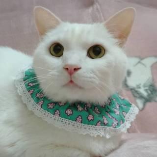 【4/13東日本橋】穏やかな白猫紳士♡シロくん