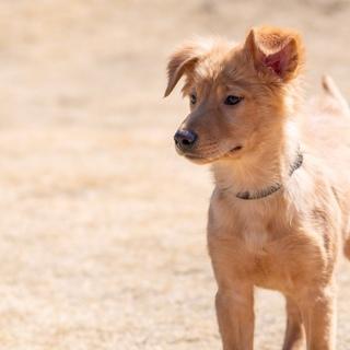 5ヶ月仔犬男の子