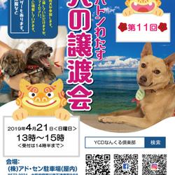4月21日(日)いのちのバトンわたす 犬の譲渡会(第11回) サムネイル1