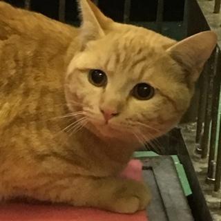 岩国市健康福祉センター茶トラ成猫命の期限あり