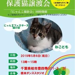 5/6【祝】 猫カフェ風保護猫譲渡会