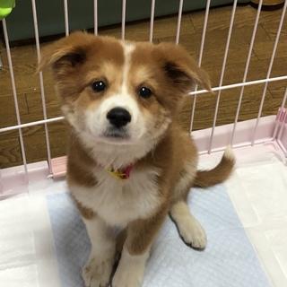 可愛い子犬のケイ