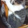 11月7日生まれ 子猫の里親さん募集中! サムネイル4