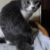 11月7日生まれ 子猫の里親さん募集中! サムネイル5