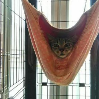 里親会参加猫