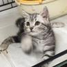 生後3ヶ月♡「猫パーンチッ!!」