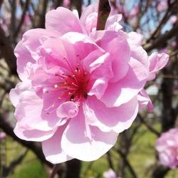 お久しぶりです!春ですね(寒い(;'∀')。。。