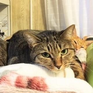 ストラ☆福島被災猫の美人な女の子