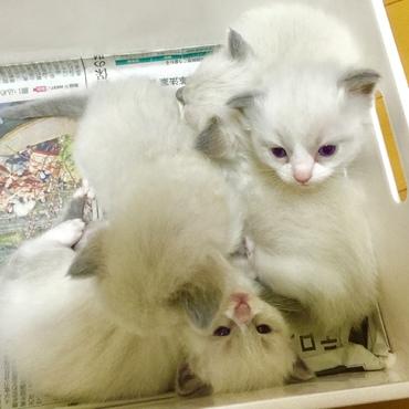 2015年♡元気に愛らしく成長する子猫たち(⑅•ω•⑅)