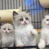 2017年♡元気に逞しく成長した子猫たち(ლ˘╰╯˘).。.:*♡