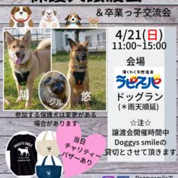 保護犬譲渡会&卒業っ子交流会