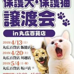 保護犬・保護猫譲渡会inまるひろ川越店