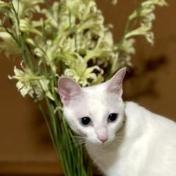 白猫マルコのプチ冒険
