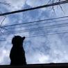 今朝、なぜかこげ茶さんが屋根の上にいました。