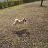 赤ちゃんのときから、ぴょんぴょん、まるでウサギのように跳ねる!ドックランをこんなに楽しめるとは!庭がほしい!