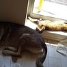 我が家の紅一点!猫の女の子。マイペースで保護犬も全然大丈夫!
