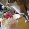 お花が一本ずつ折れていく原因発見!花びら落とされた~!そして花瓶の水をのむという、、