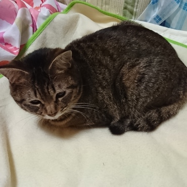 先住猫チャッピーのベッドを占領したClaire