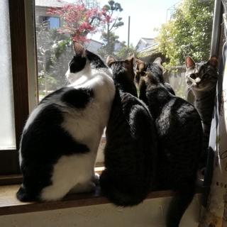 GW淡路島に猫達に会いに来てください☆