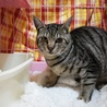 GW淡路島に猫達に会いに来てください☆ サムネイル2