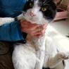 GW淡路島に猫達に会いに来てください☆ サムネイル3