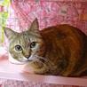 GW淡路島に猫達に会いに来てください☆ サムネイル4