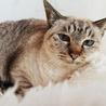 GW淡路島に猫達に会いに来てください☆ サムネイル5