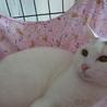 GW淡路島に猫達に会いに来てください☆ サムネイル7