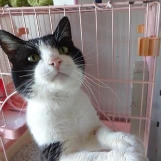 癒し系♡人が大好きな猫です