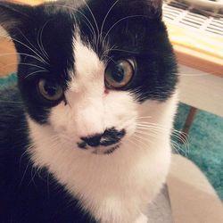 猫1歳になりました~!