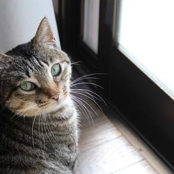 猫の譲渡会 瑞穂区堀田 ブラザーミュージアムにて