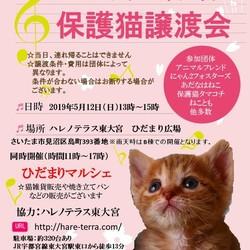 5/12(日)第2回ハレノテラス東大宮保護猫譲渡会