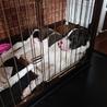 MIX犬 8ヶ月 男の子 サムネイル2
